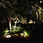 Low-Voltage Palm Beach Landscape Lighting