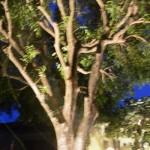 Up-lit tree