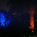 Boynton Beach landscape lighting 3