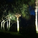 Boynton Beach landscape lighting 5