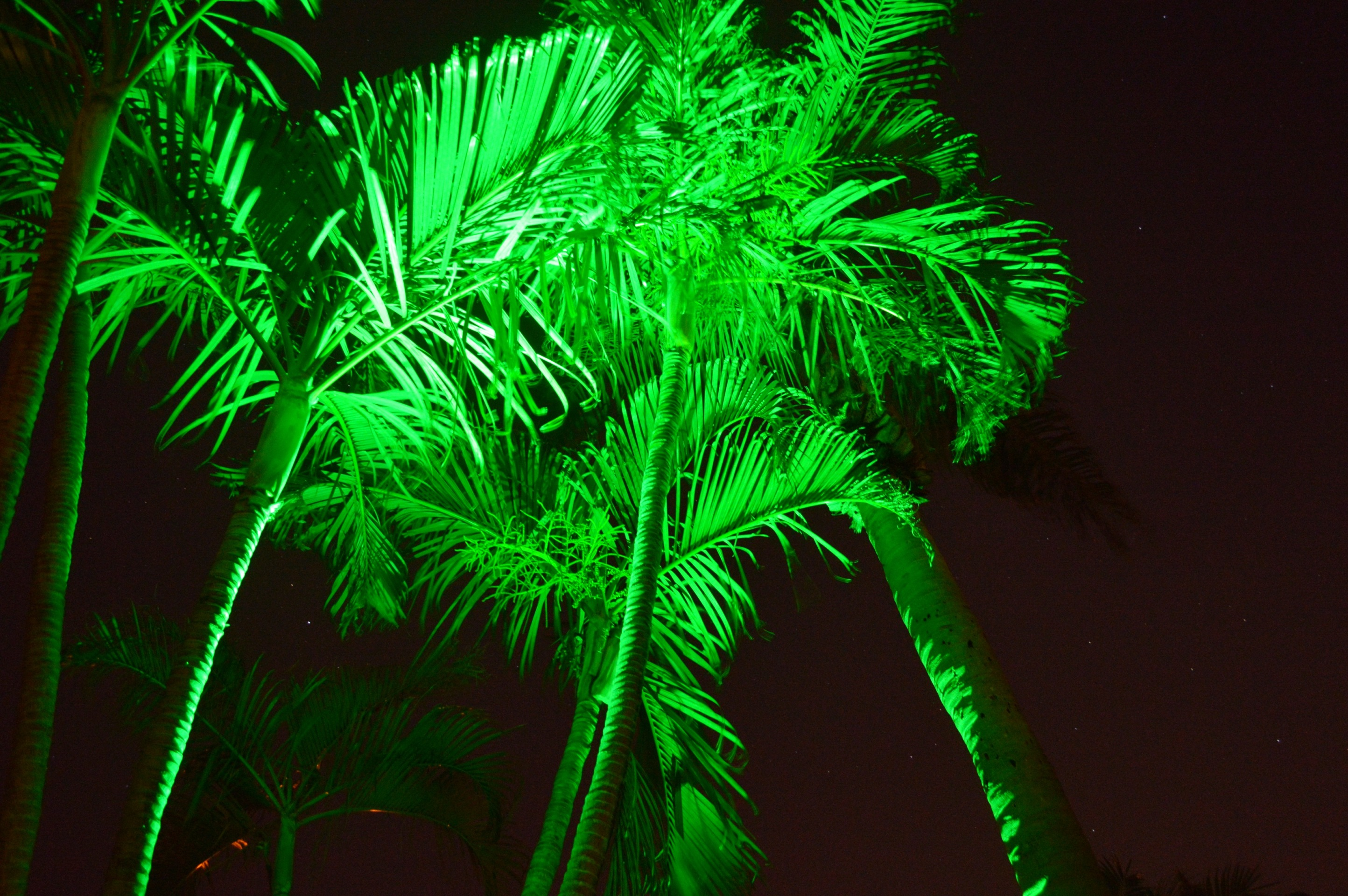 Boynton Beach landscaping lighting 7